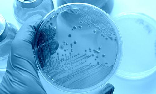 Dr. med. Schütze - Microbiom, Bactoflor